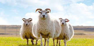 Í verslunum Líflands er fjölbreytt fyrir hverskonar starfsemi tengda landbúnaði. Ljósmynd: Lífland.