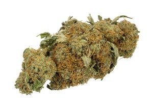 Kannabis. Mynd: Wikipedia.